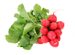 radishes_2.png
